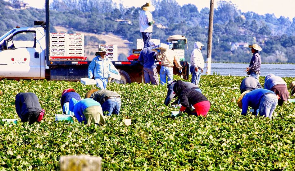 Where salad comes from... Working Working Hard Field Migrant Workers Real People Real Life Eye4photography  Check This Out Taking Photos