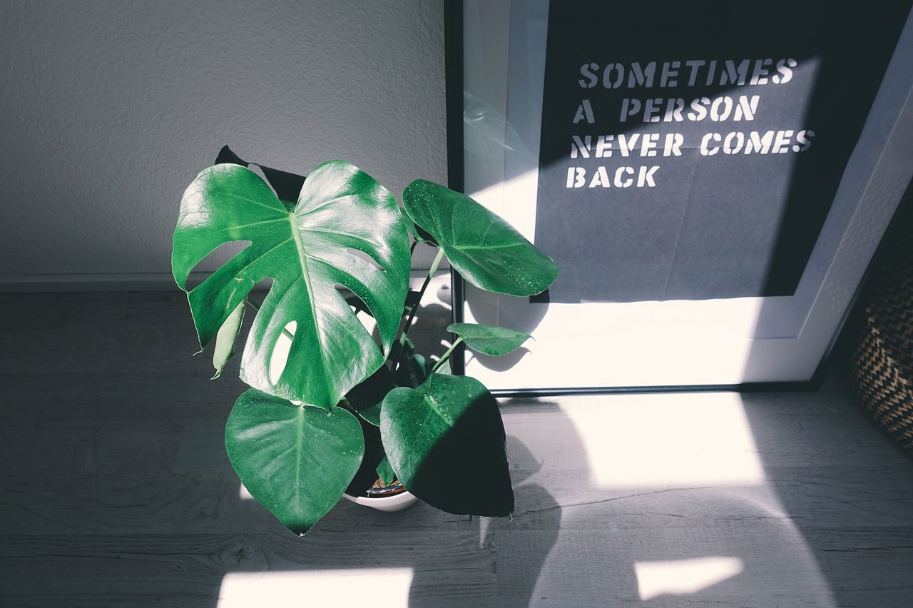 Green Color Leaf Leaves Growth Growing Plant Lifestyles Life Sunlight Light And Shadow Poster Green Day Sunshine Indoors  Home Shadow Plants And Flowers Summer Minimalism Nature Love Freshness