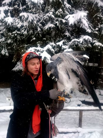 Winter Snow Cold Temperature Hawk Animal Portrait Wild Tamed Animals