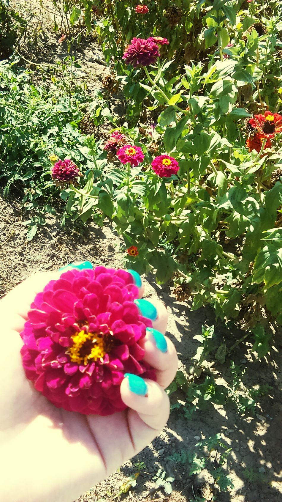 El jardin de mi abuelo 🚹💚🌼🌼🌾