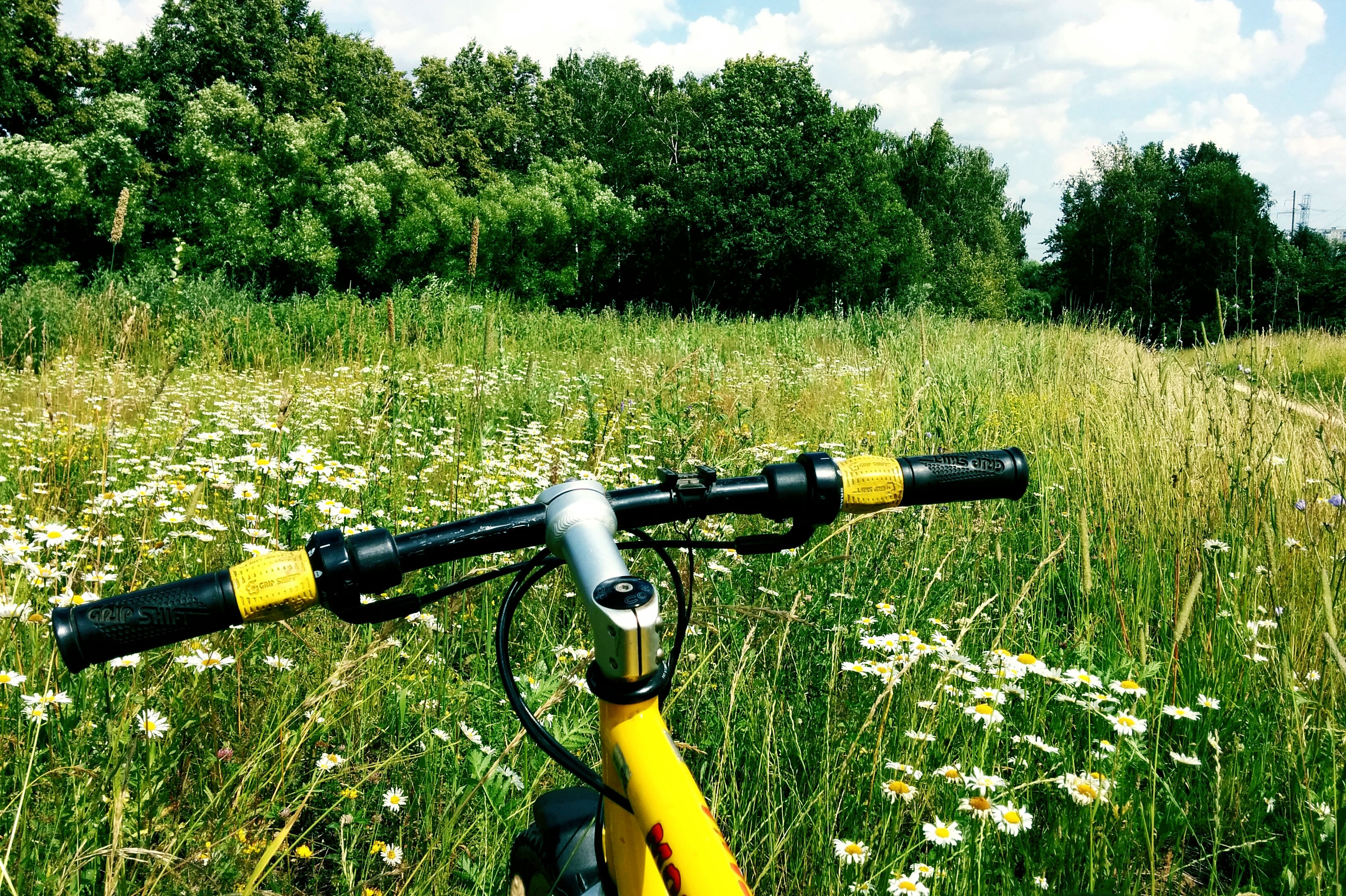 grass, field, grassy, transportation, green color, land vehicle, growth, tree, landscape, day, mode of transport, sky, tranquility, sport, agriculture, outdoors, nature, bicycle, protection, no people