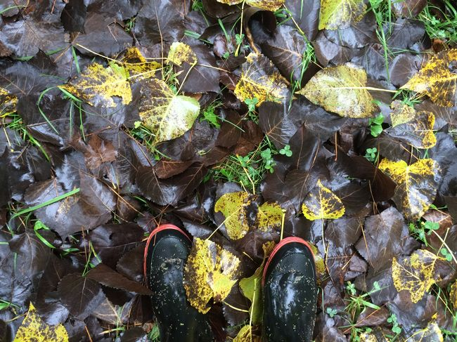 Abundance Autumn Change Day Field Green Green Color Growth Human Foot Leaf Leaves Lifestyles Low Section Men Nature Outdoors Person Personal Perspective Plant Rain Rubber Boots Shoe Standing