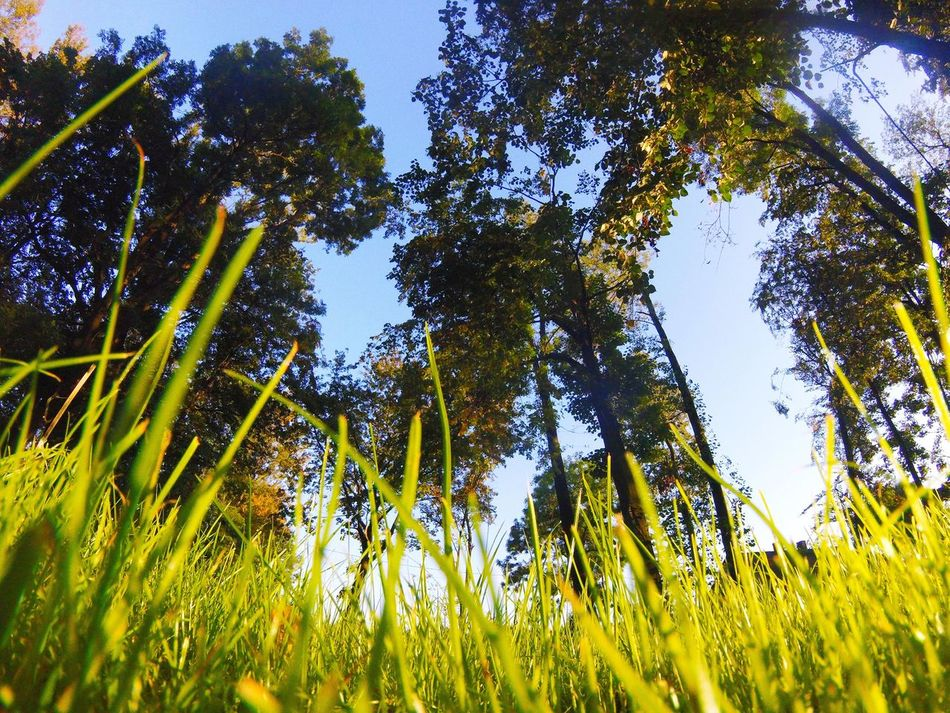 Check This Out Relaxing Hello World Wide Angle Tree Grass Green Green Green!