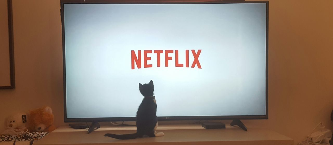 Television Cat Netflix Indoors  No People