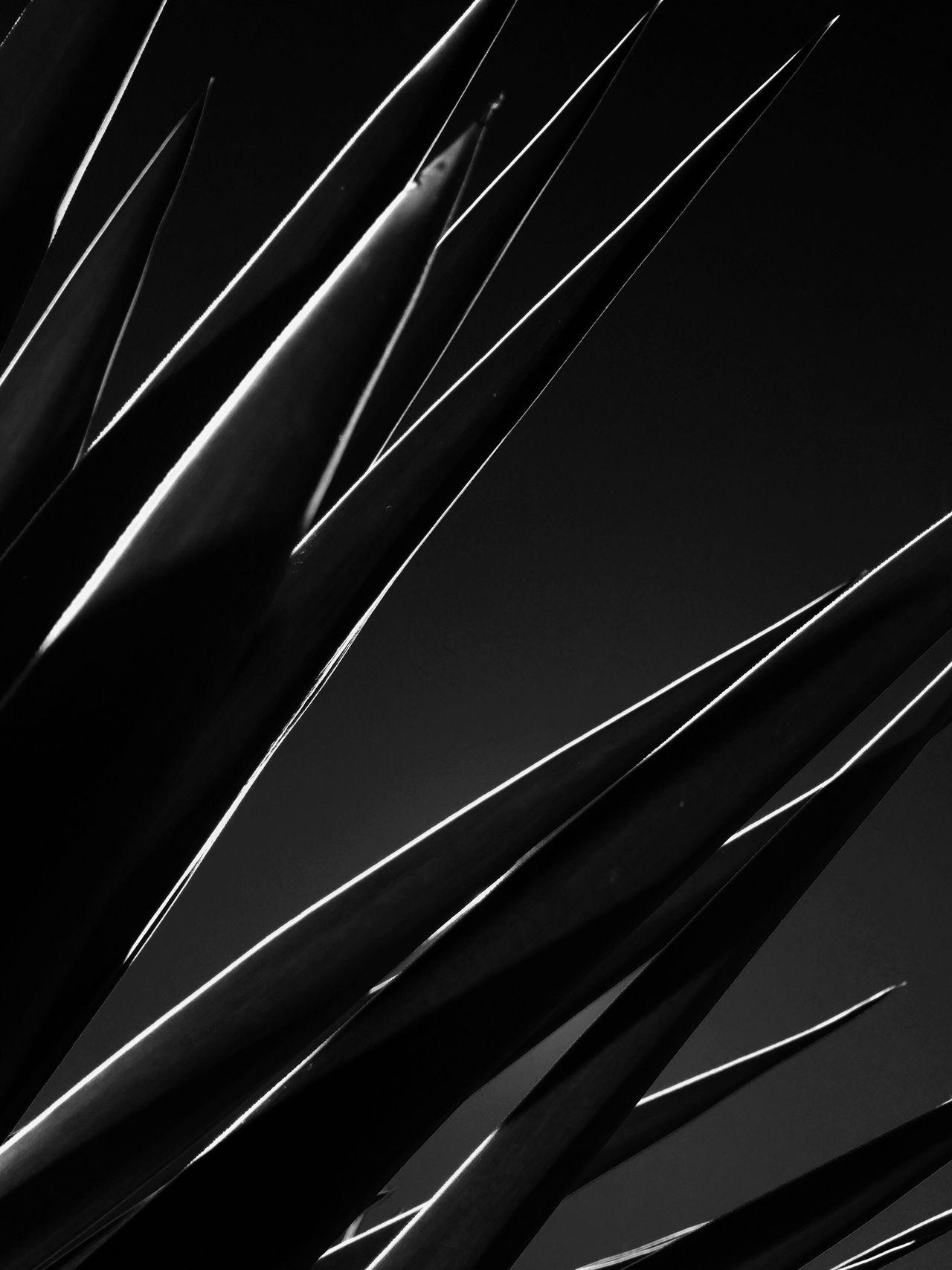 Monochrome Photography Pattern Sharp
