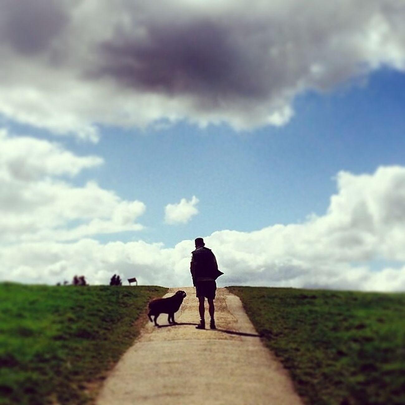 Urban Escape Dog Walking Hampstead Heath Relax