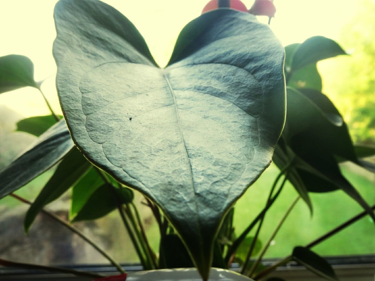 Low Angle View Of Potted Plant Leaf