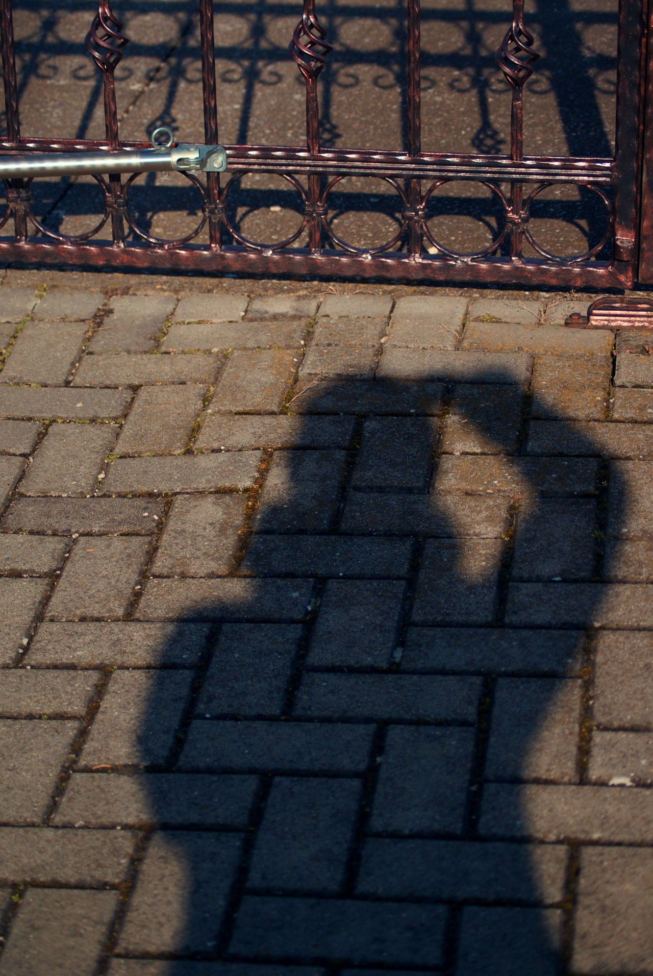 Shadow selfie :-) Little fun with the shadows and lights. Close-up Day Fence Outdoors Pattern Pavement Pavement Patterns Photgrapher Photographer In The Shot Selfie Shadow Shadow And Light Shadow Selfie Shadows & Lights Urban Life Wrought Iron The City Light Left Handed