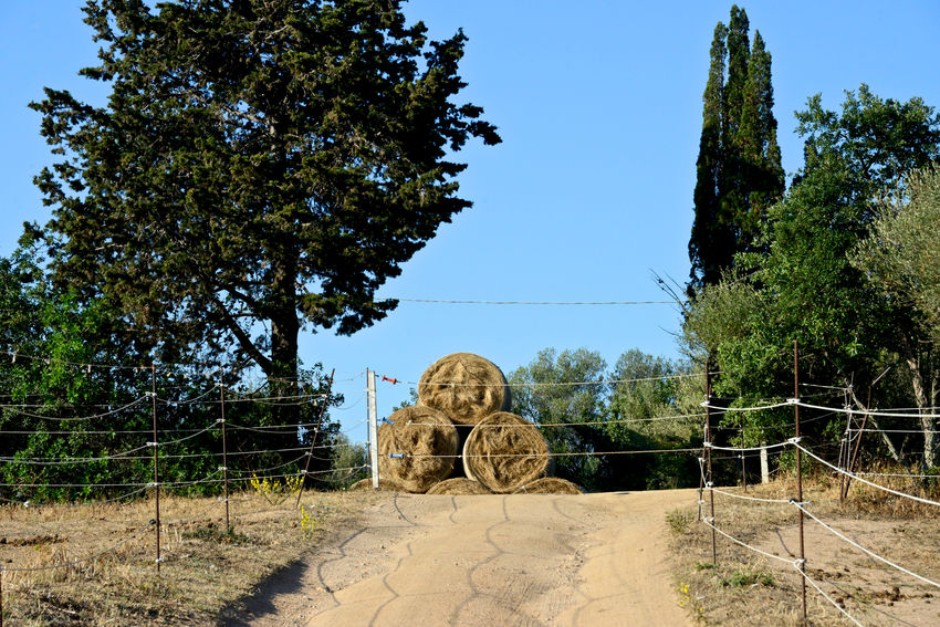 countryside Agriculture Sardinia Sardegna Italy  Trees Animal Food Countryside Dirt Road Hay Hay Bales Landscape No People Outdoors Paddock Riding School Tree