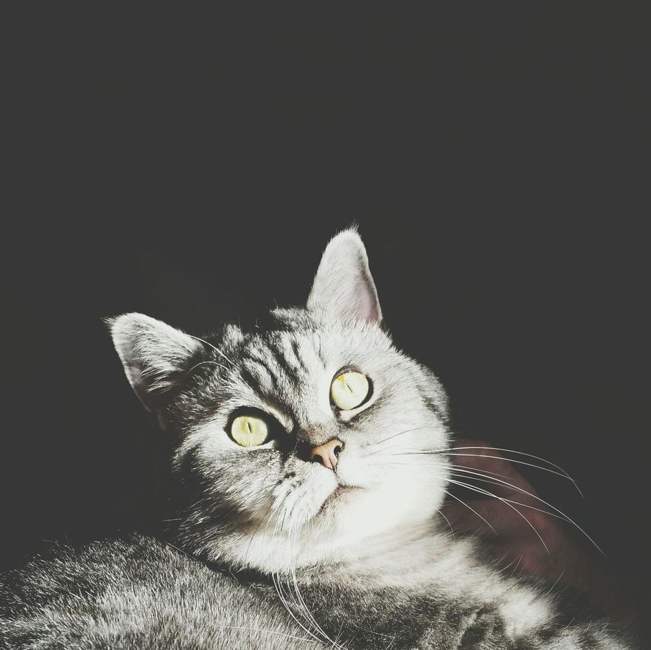 Louise Catporn Louise Cat Perfectlight