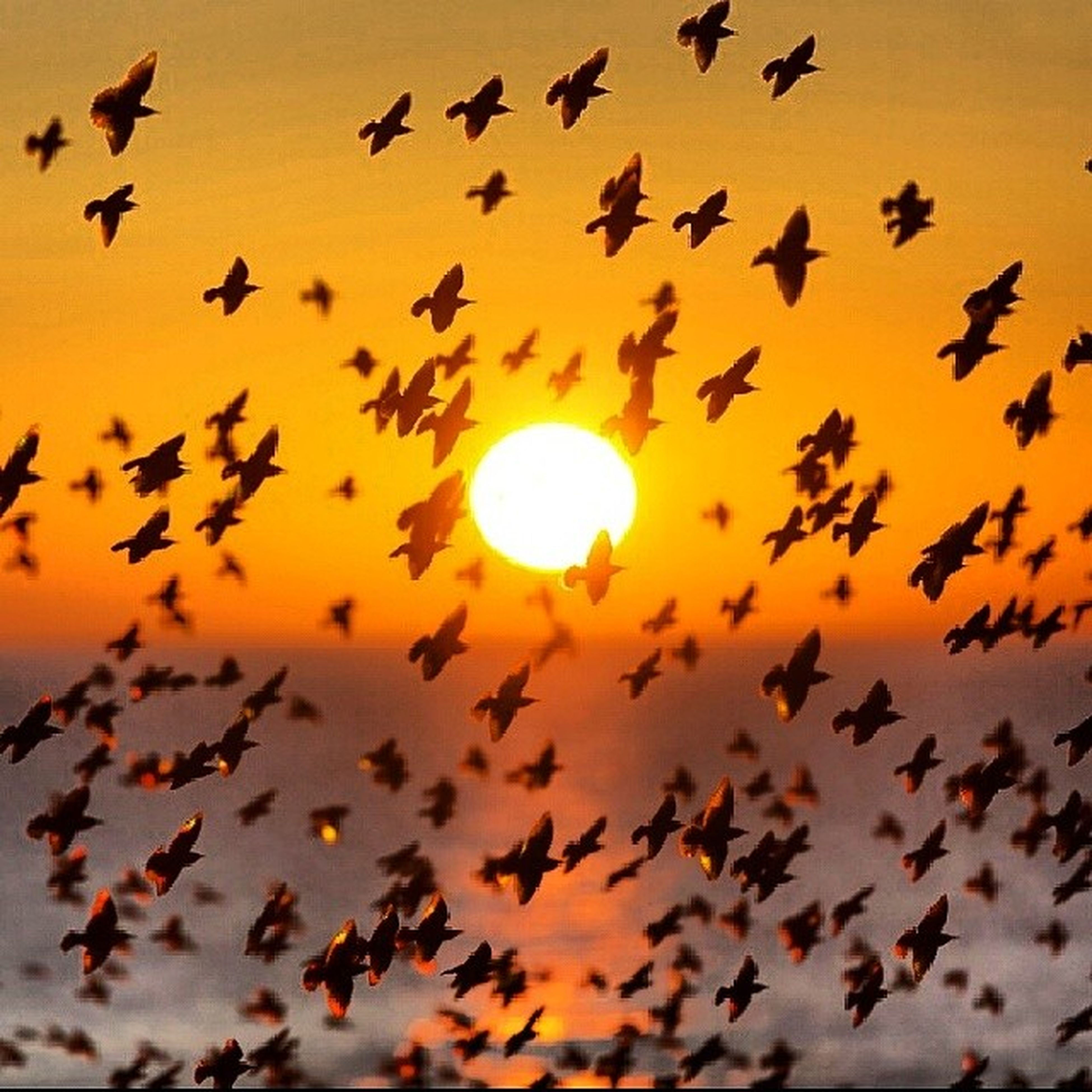 bird, flying, sunset, animal themes, sun, flock of birds, low angle view, animals in the wild, wildlife, sky, silhouette, orange color, beauty in nature, nature, scenics, mid-air, tranquility, outdoors, sunlight