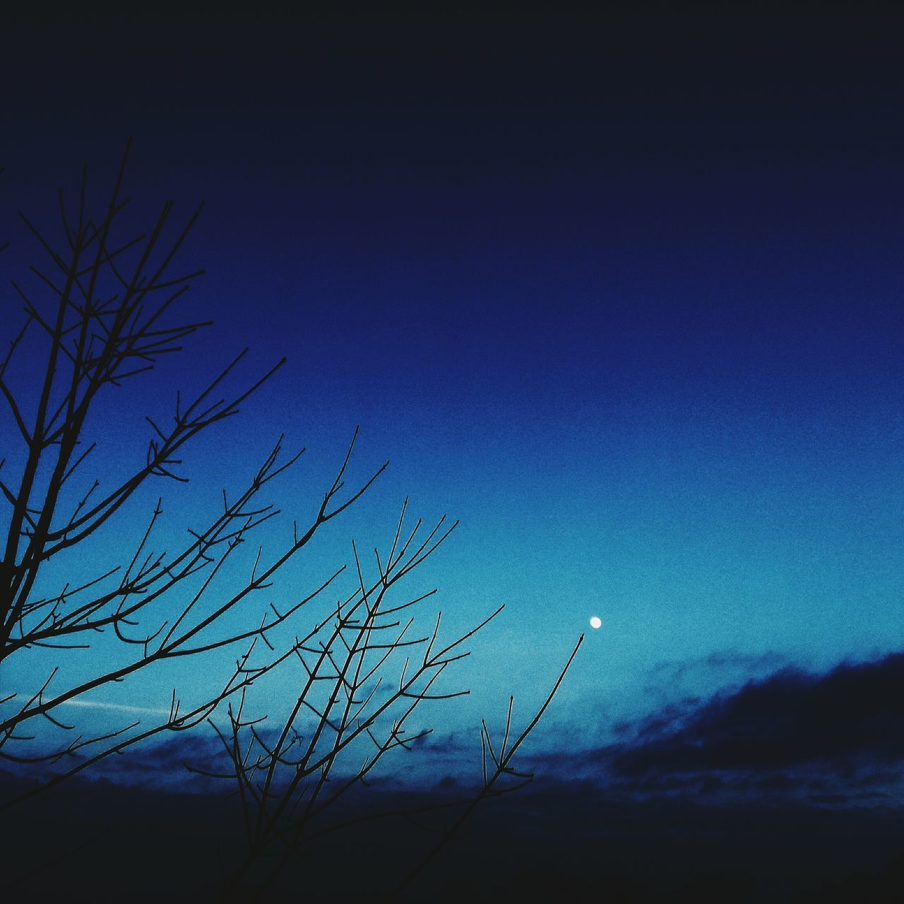 To the moon and back. Blue Sky Nature Bare Tree Outdoors Tree No People Beauty In Nature Star - Space Astronomy Night Asthetic Vscosky Vscocam