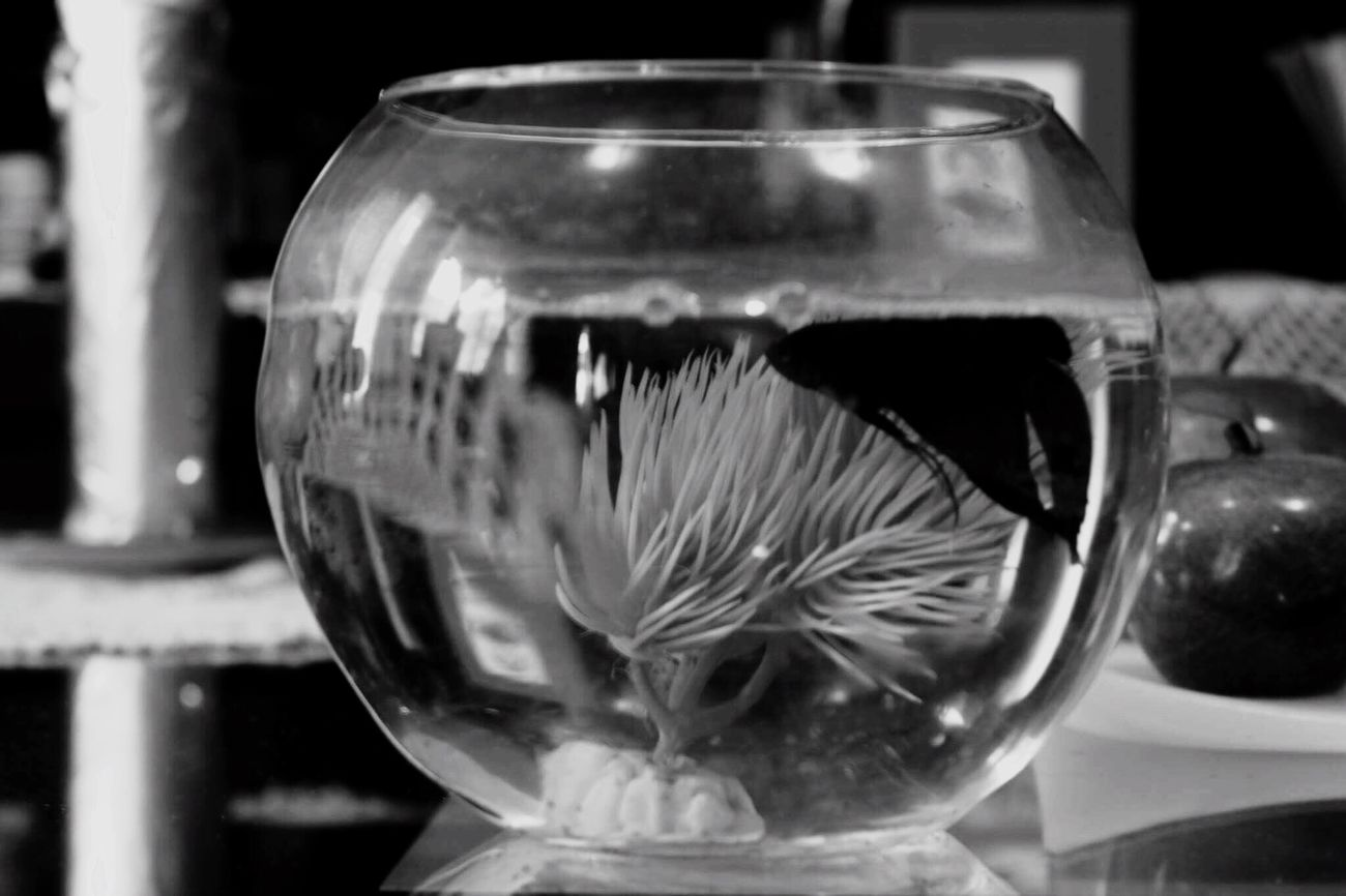 Water Animals Fish Structure Transparent BlackMBalck And White Nature Indoors  Art, Drawing, Creativity Photo