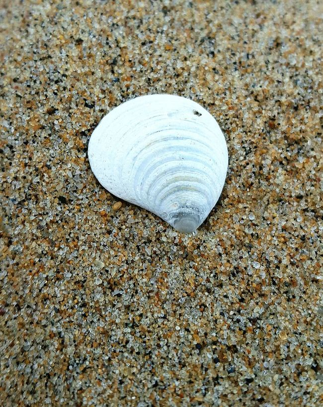 Beach Sand Seashell Grains Of Sand Detail Summer The Essence Of Summer can't wait for the warm weather