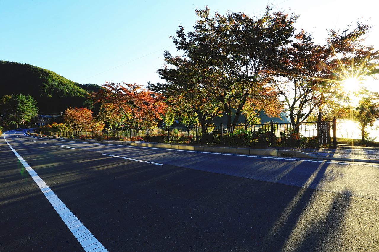 tree, road marking, road, outdoors, sunlight, transportation, day, dividing line, the way forward, clear sky, tranquility, asphalt, no people, nature, growth, scenics, sky, beauty in nature