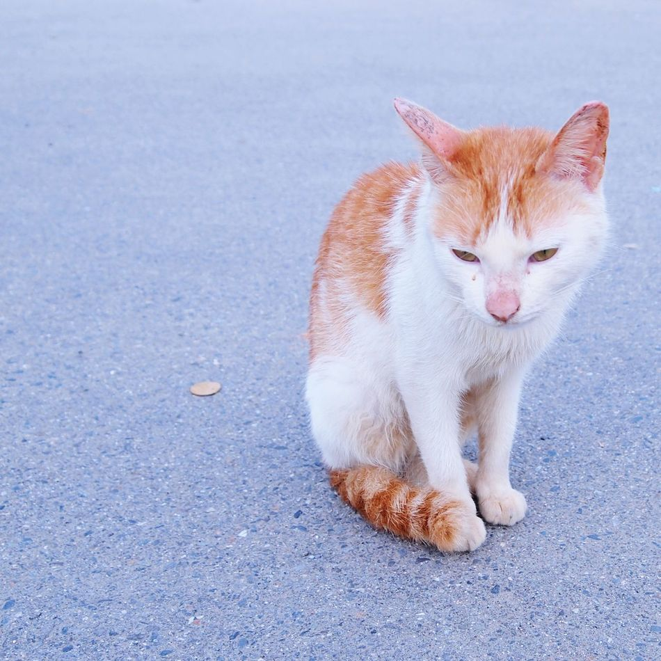 My shy little stranger!! Domestic Animals Pets Animal Themes One Animal Domestic Cat Mammal Full Length Feline Looking At Camera Portrait Cat Ginger Cat No People Outdoors Day Ginger Cat Sitting Street Cat Street Cats Close-up Lifestyles Taipei Taipei,Taiwan