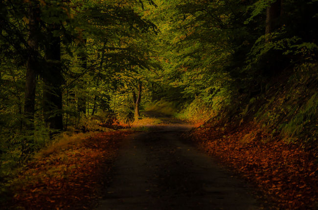 Tree Nature Beauty In Nature Forest Autumn Road France 🇫🇷 Eyemcollections Alsace France Naturebeauty Vosges Nikon D7000 EyeEm Best Shots Eyem Gallery Color Of Life Path Automn Colors