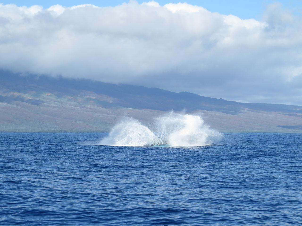Beautiful stock photos of wal, Blue, Calm, Day, Lahaina