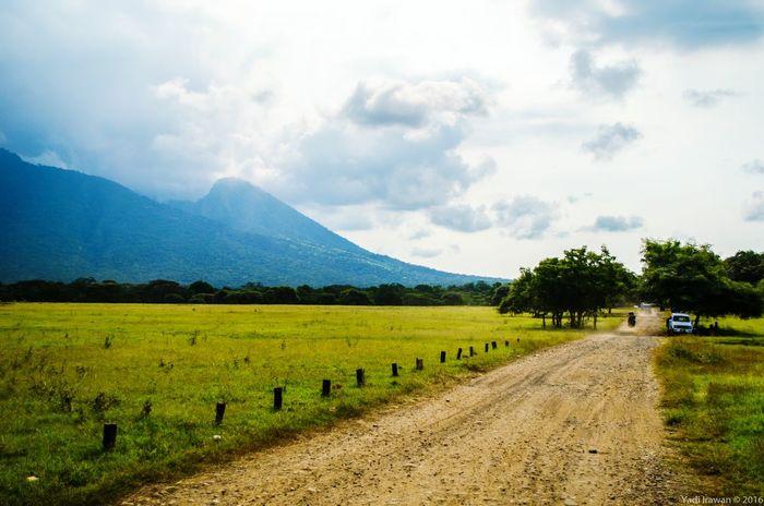 Indonesian savannah, Balurannationalpark Naturesnap Testlife May16 D5100 The Great Outdoors With Adobe The Great Outdoors - 2016 EyeEm Awards The Street Photographer - 2016 EyeEm Awards