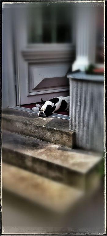 Kleiner Hund, aber... Littlebro Dogs Life Beware Of The Dog