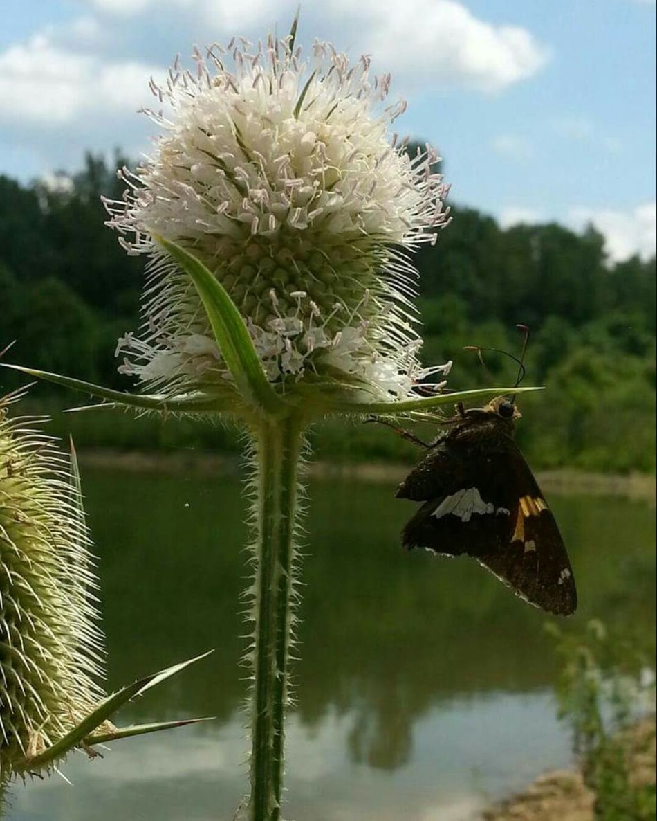 Beautiful stock photos of weed, Beauty In Nature, Butterfly, Close-Up, Cloud