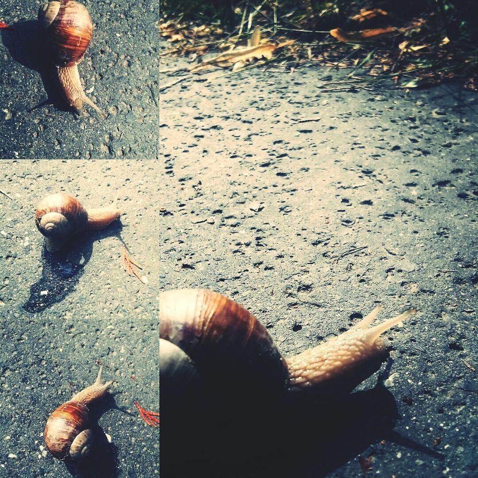Snail Fastandfurious Run Natural Mollusca Gastropoda Evolution  Szeged Csiga éticsiga