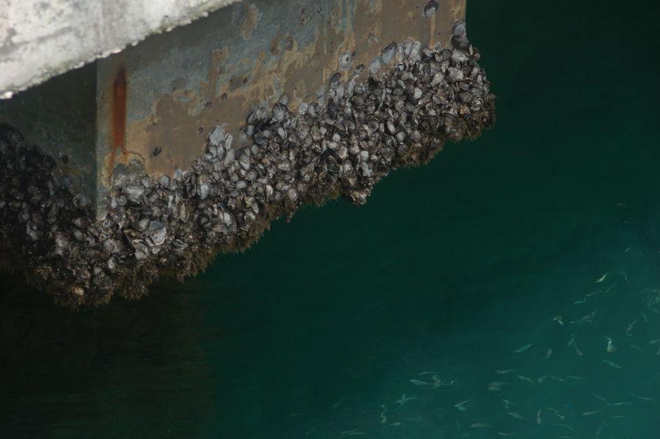 Incognito 01 Incognito Hidden Beauty SHELLFISH  Water Fish Bluemarine Sea Seaport District in Telukbayur