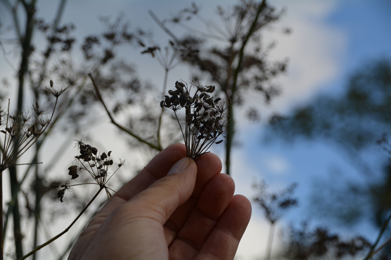 human hand, human body part, holding, one person, nature, personal perspective, tree, real people, human finger, outdoors, focus on foreground, day, close-up, beauty in nature, winter, sky, snow, flower, people