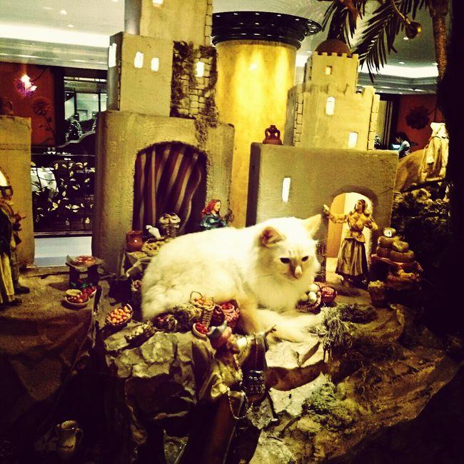 Paris Cat Hotel Le Bristol Paris Chrstmas:))