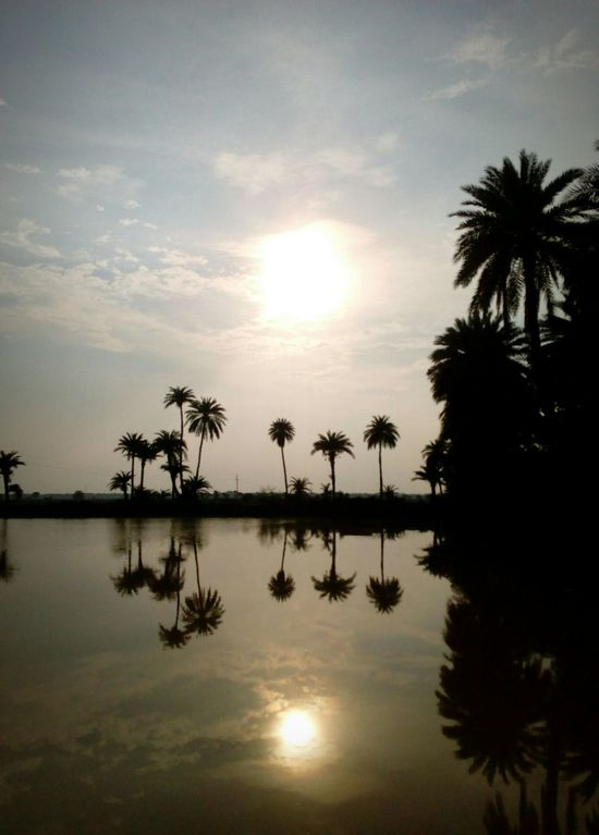 Sunset Reflection DatePalm Tress Water Reflections Rural India Smartphonephotography Sun In Clouds Sky