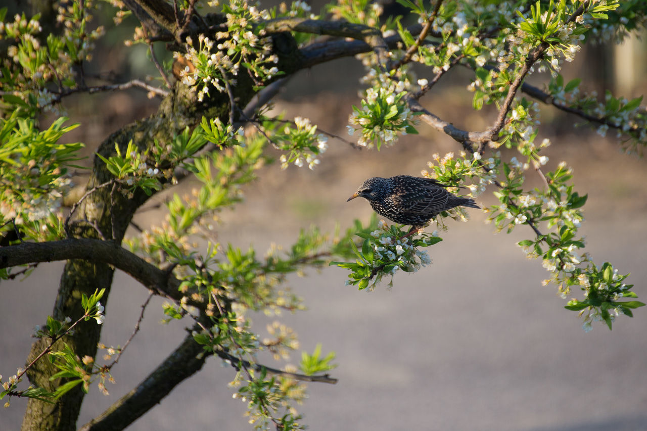 Animal Themes Animal Wildlife Animals In The Wild Beauty In Nature Bird Branch Close-up Day Flower Focus On Foreground Fragility Freshness Growth Nature No People One Animal Outdoors Perching Tree