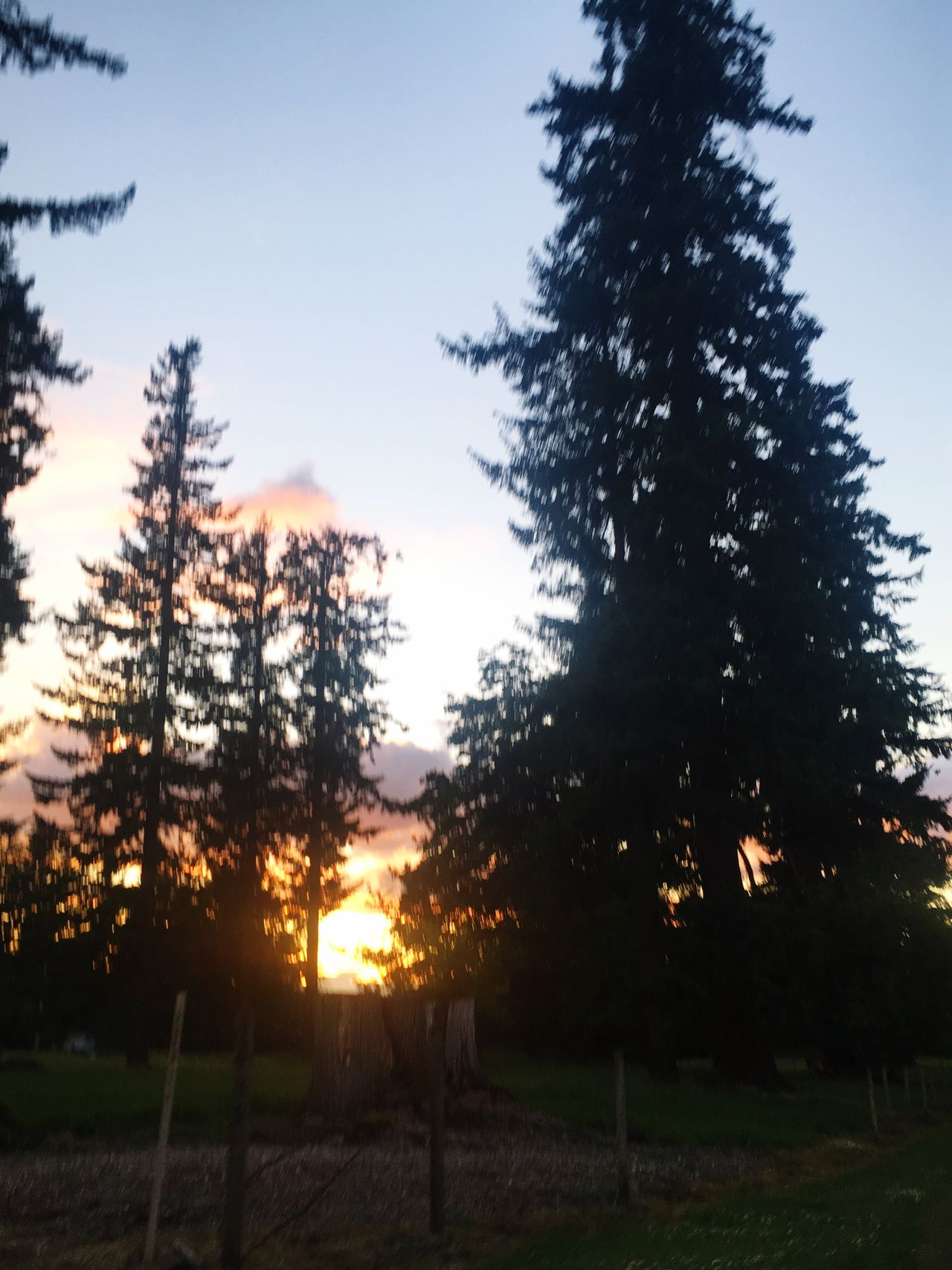 Tree Silhouette No People Nature Tranquility Beauty In Nature Tranquil Scene Sunset Landscape Scenics Sky Outdoors Day