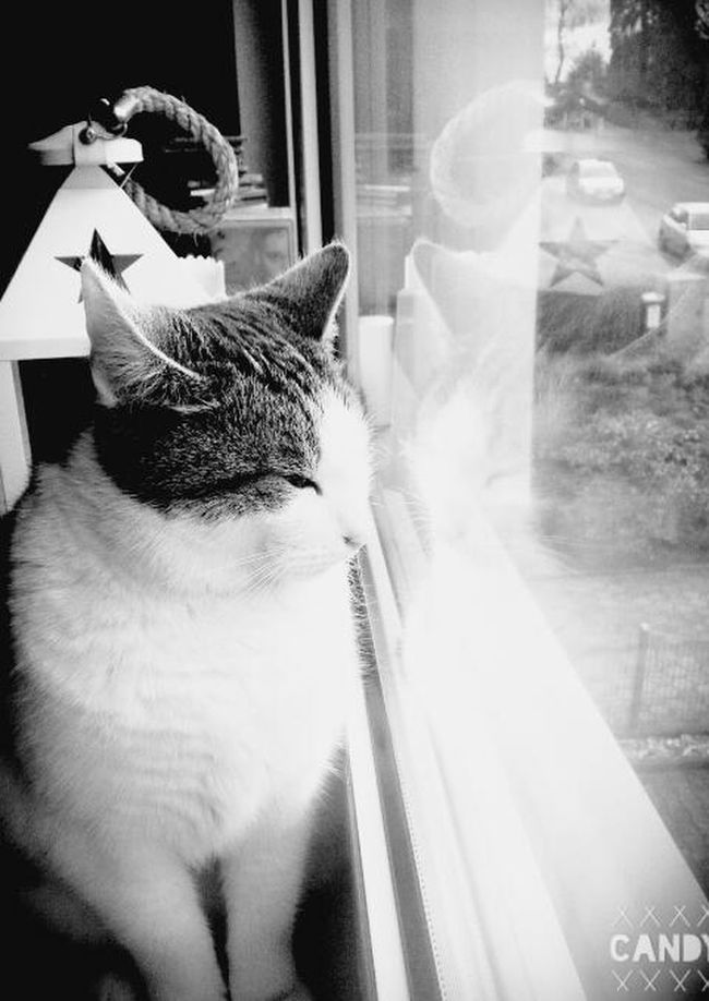My cat♡ Cat♡ Cat Eye4photography  EyeEm Best Shots Black And White Blackandwhite Photography Blackandwhite Teflection Window Chilling Love ♥ I Love My Cat Love My Cat I Love My Cat♥