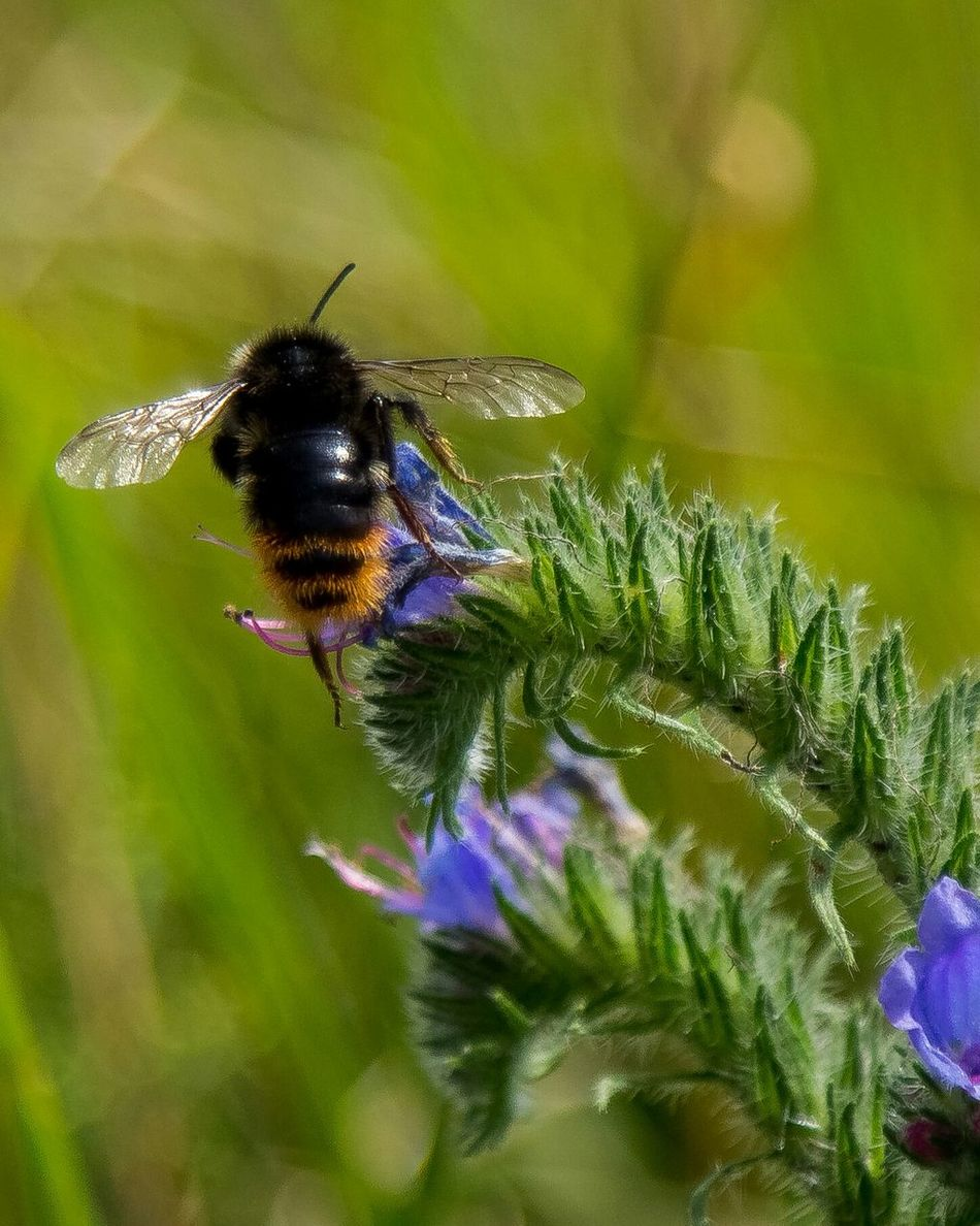 Beautiful stock photos of bee, Animal Themes, Animals In The Wild, Bee, Close-Up
