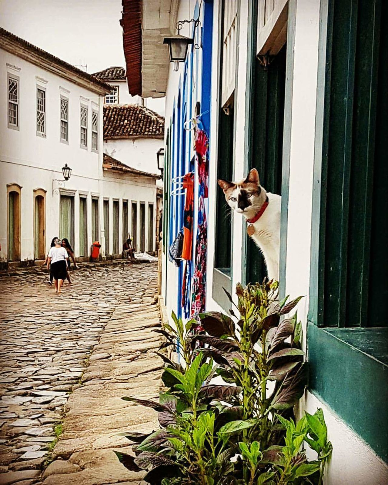 Architecture Building Exterior Built Structure Flower Outdoors Day Adults Only People Adult Historic Historic City Cats Of EyeEm Cats 🐱 Cats Lovers  Cats Window Windows And Doors Doors DoorsAndWindowsProject Doors And Windows Around The World Paraty - RJ Paraty Paraty- Rj Paraty, Brazil Paraty Rio De Janeiro