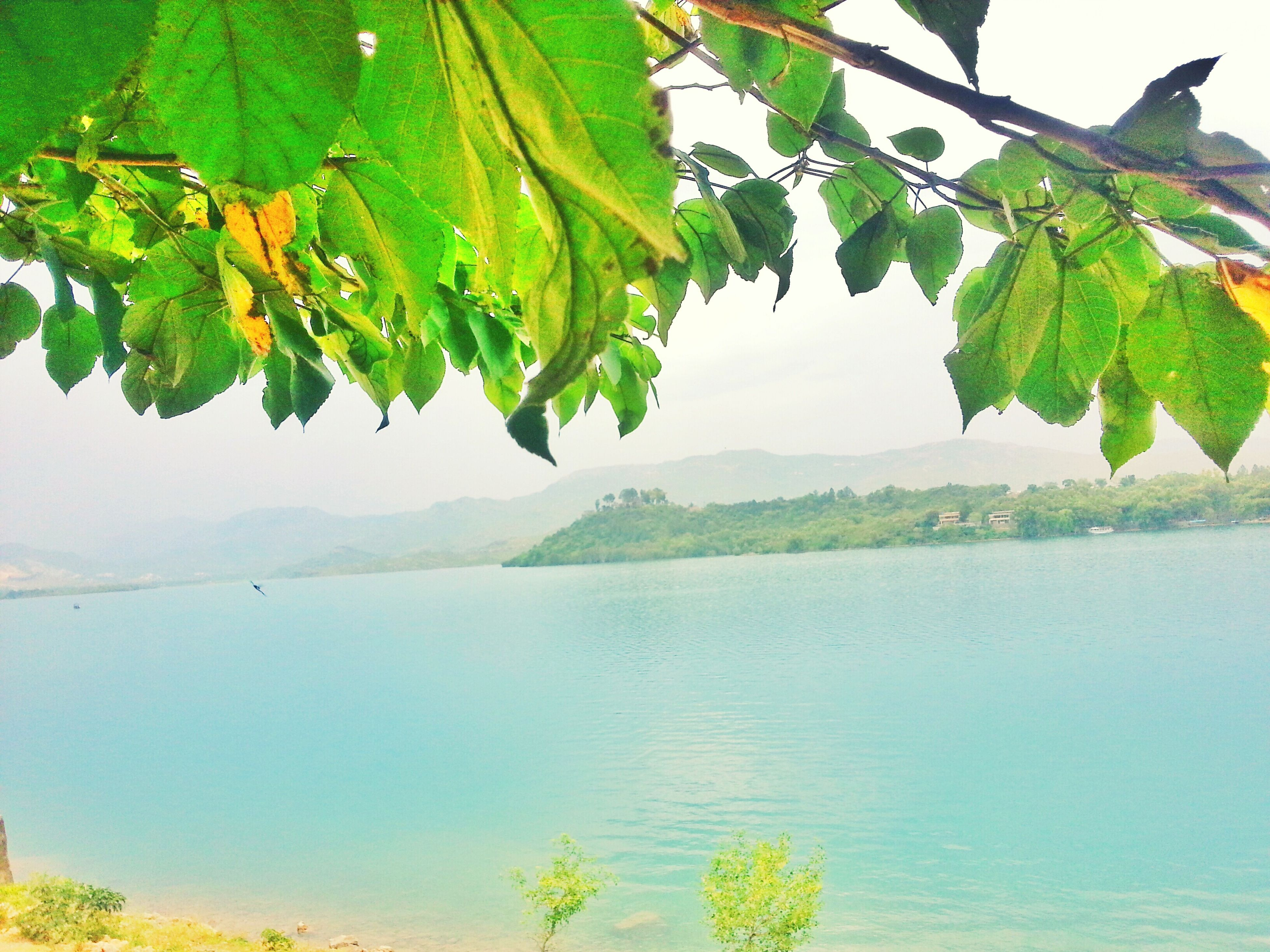 water, tranquility, tranquil scene, beauty in nature, leaf, scenics, nature, growth, tree, sea, lake, branch, plant, green color, idyllic, sky, clear sky, day, horizon over water, waterfront