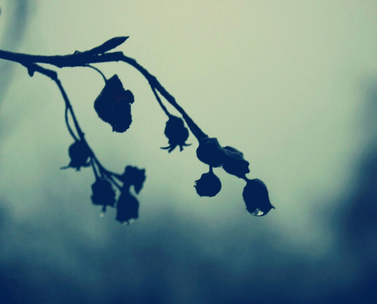 Close-Up Of Silhouette Flowers Growing On Tree