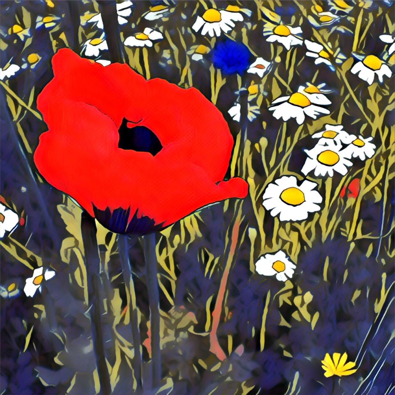 Flower Red Nature Petal Plant Flower Head Blooming Daisies Wildflowers Graphic Illustration Painterly Photo Art Iphone6s ShotOnIphone IPhoneography Poppy