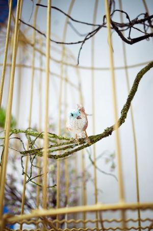 Animal Animal Head  Animal Themes Animals In Captivity Avian Bird Bird Photography Birds Cage Colourful Day Nature Outdoors Perching Sparrow Vibrant Colors Wildlife