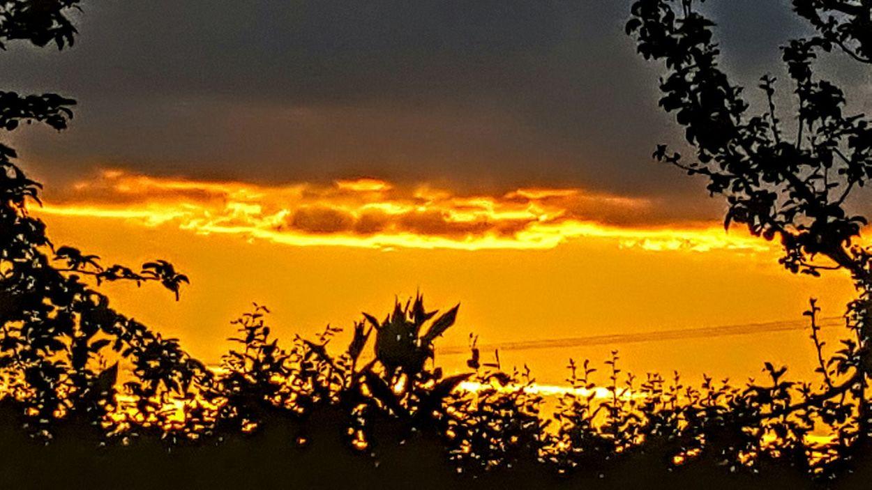 Respect For The Good Taste Sonnenuntergang 🌇 Let's Do It Chic! Sonnenuntergang Im Sommer WolkenbilderBaum 🌳🌲