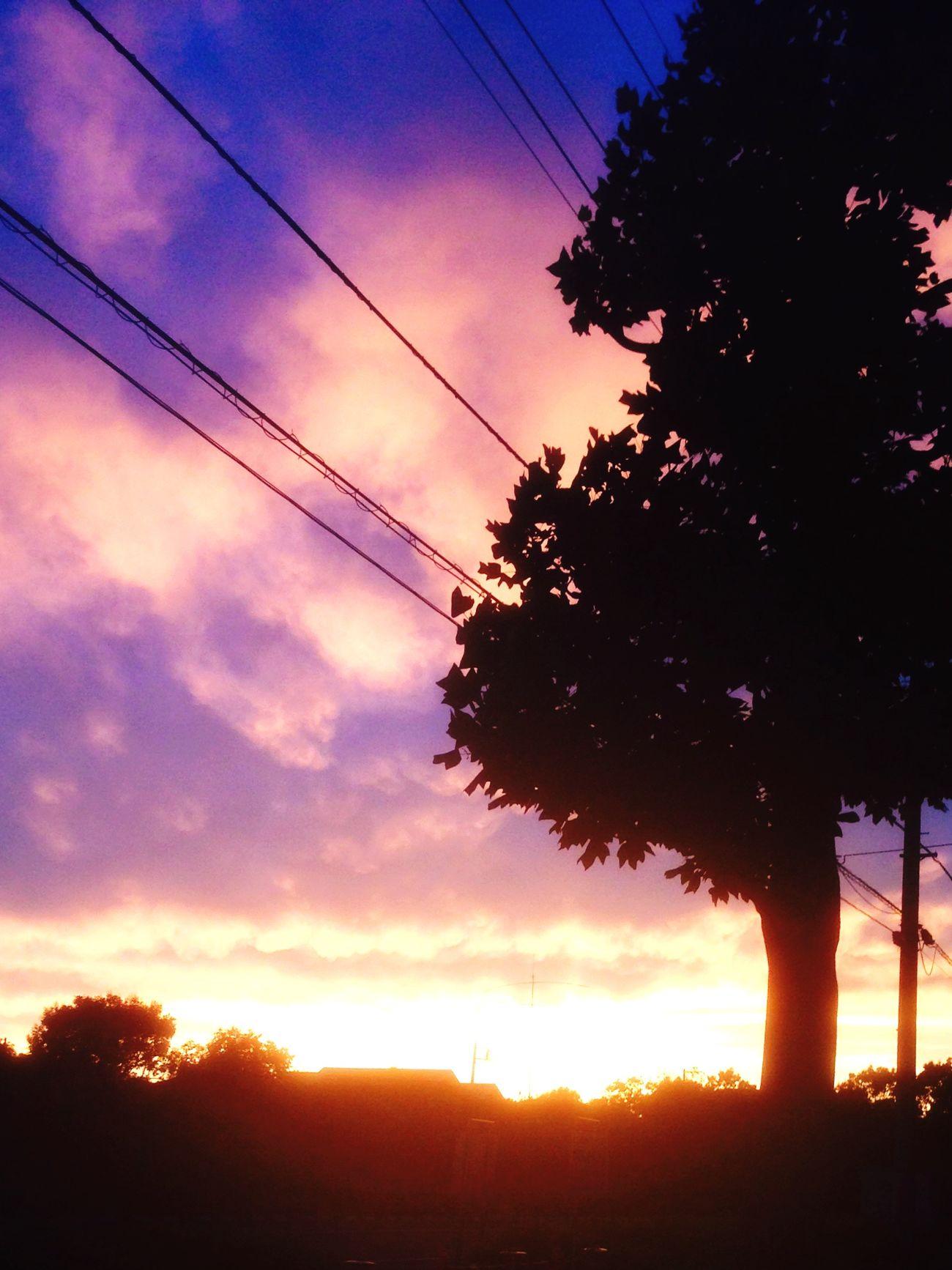雨上がりの夕陽にスマホを向けたら奇跡的に木の葉がハート型に。