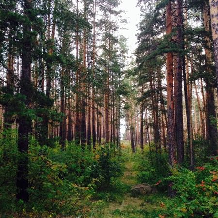 Forest Nature Summer 🌲🌳🌿
