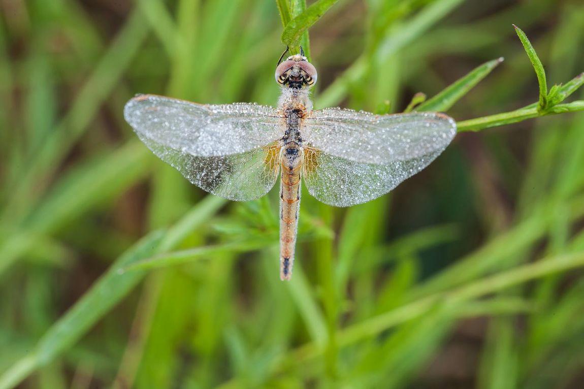 Dragonfly My Dragonfly Photo EyeEm Best Shots EyeEm Best Edits Dragonfly Sailing Dragonfly Wings