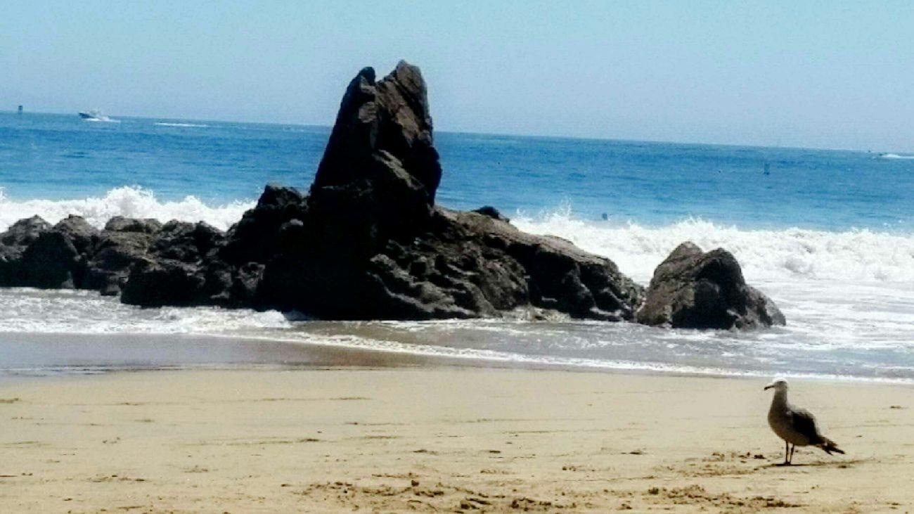 Coronadelmar Cali Beach Seagull Seagulls And Sea Calicoast Ocean