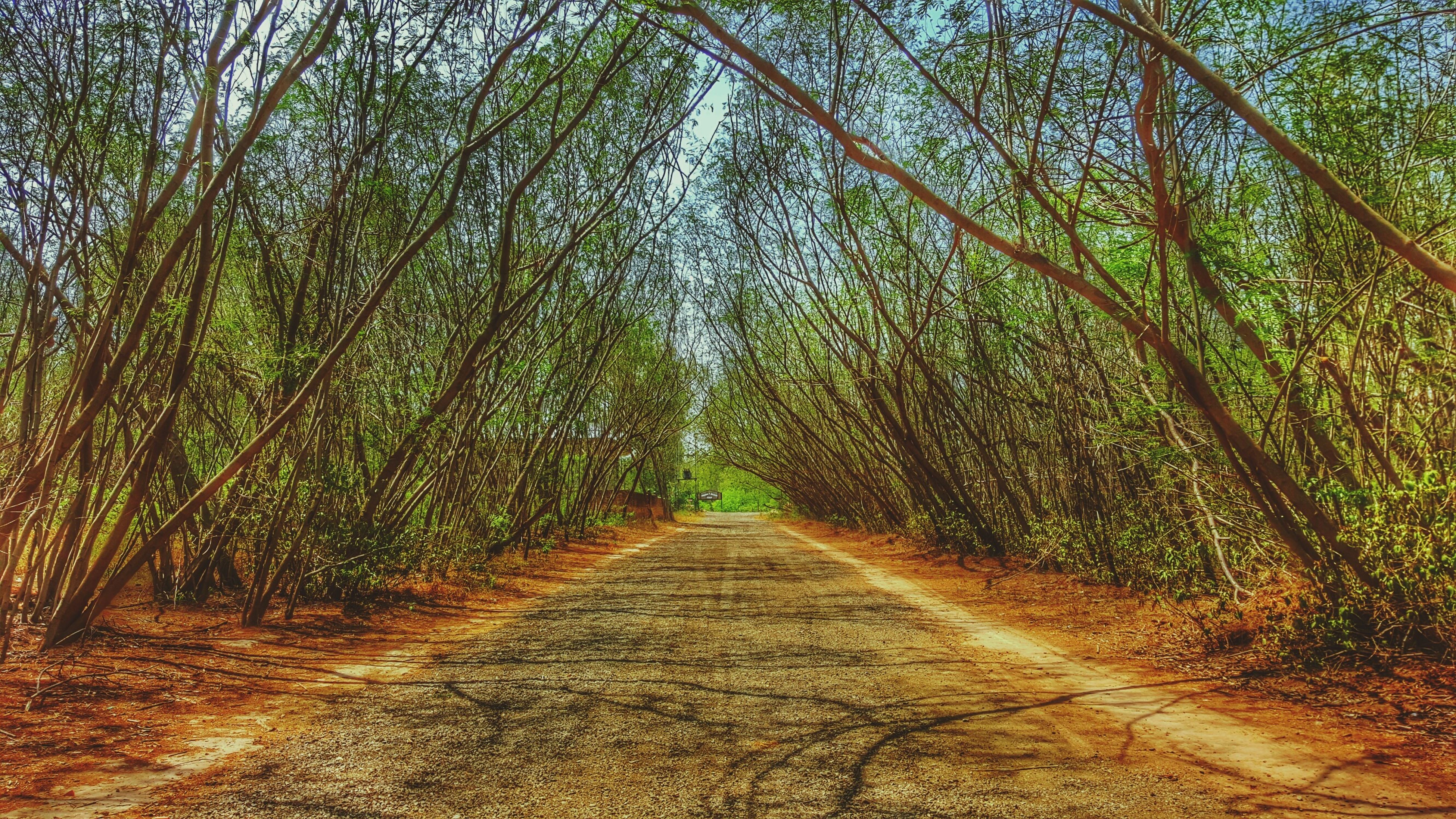 the way forward, tree, diminishing perspective, vanishing point, tranquility, growth, footpath, nature, tranquil scene, dirt road, forest, pathway, beauty in nature, green color, narrow, branch, transportation, road, treelined, walkway