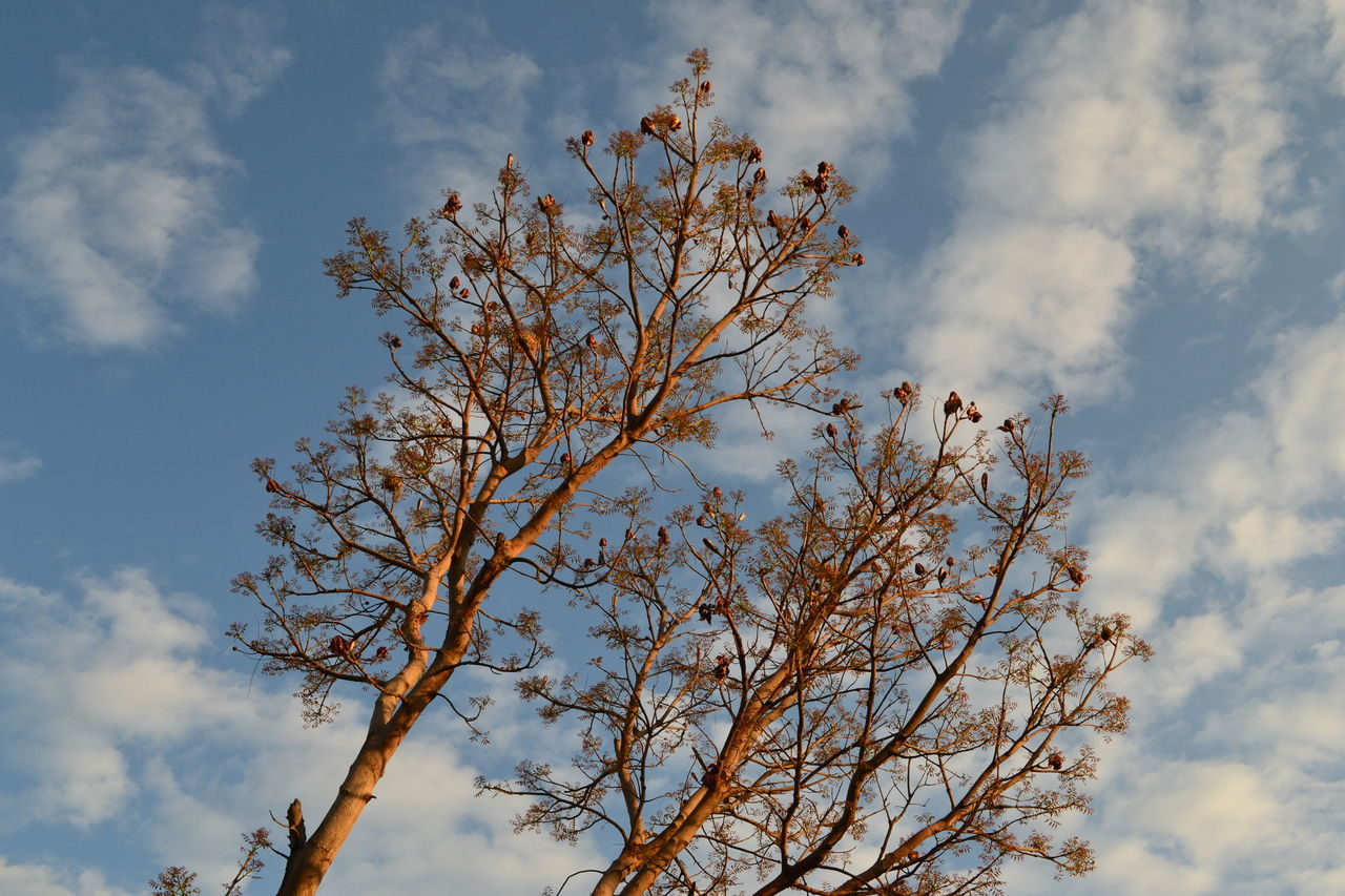 branch, tree, sky, nature, beauty in nature, low angle view, tranquility, no people, outdoors, cloud - sky, day