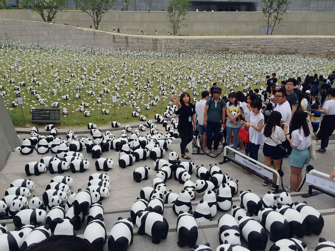 Seoul Korea Panda 1600pandas Pandasworldtour Cute Traveling Taking Photos Picoftheday