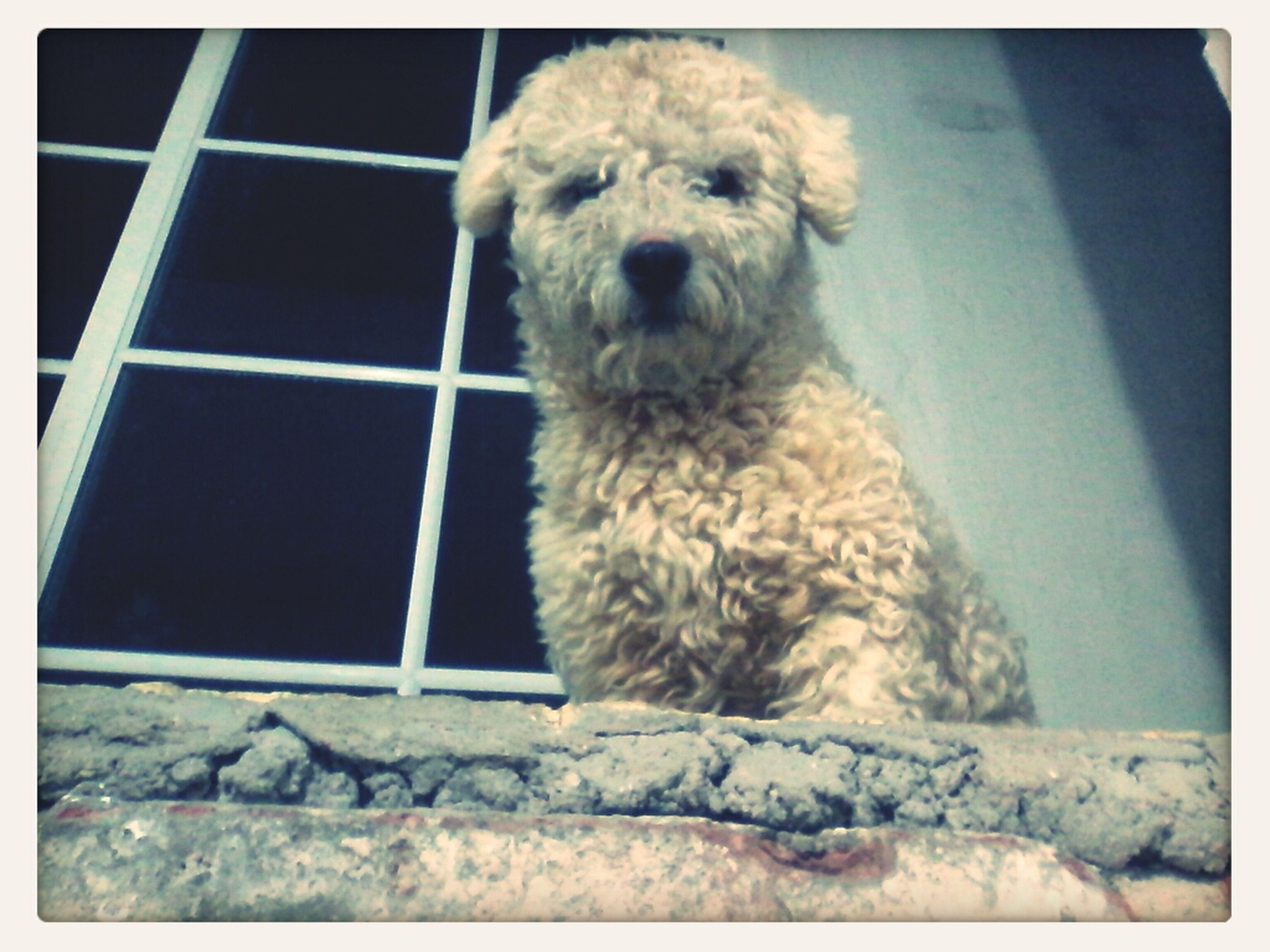 Mi perro Loocky<3