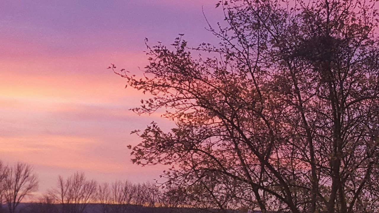 Tree Beauty In Nature Nature Pink Color Sky Outdoors Scenics No People Sunrise Sunrise_Collection Sunrise_sunsets_aroundworld Auntumn Auntumn Colors Purple Sky_collection Nature_collection Eye4photography  EyeEm Gallery Taking Photos Eeyem Photography Trees Colorful Colors Hello World Germany