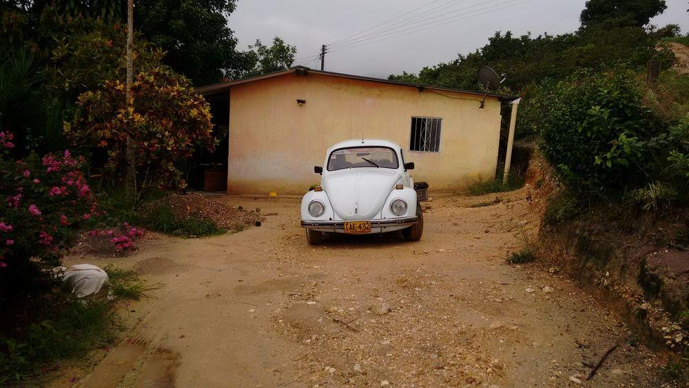 Beetle car Beetle Car Carsofeyeem Eyeem Car Photo Eyeem Beetle Car Volkswagen Beetle Volkswagen Volkswagens Beetle Volkswagen Volkswagen Bettle